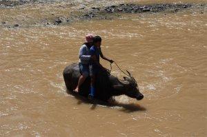 Der Weg zum Jeep führt über einen Fluss – den das Team einzeln und nacheinander (hier: Schwester Nancy) dem Rücken eines Carabaos passiert.