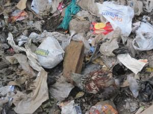 Kenia-Mathare Valley-Kahnert_Müll